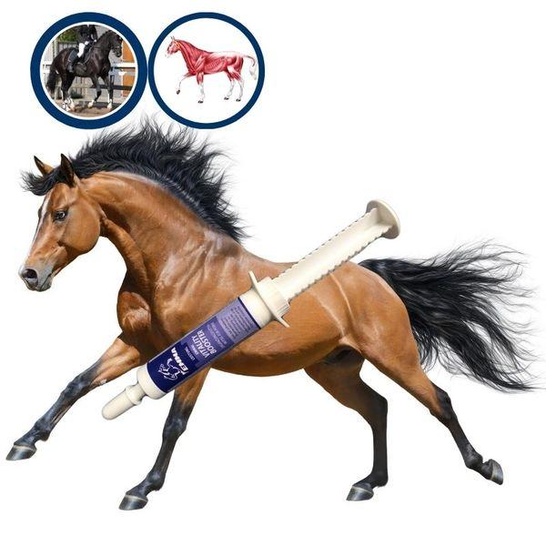 EMMA® Aminosäuren I Amino Booster I Vitamin E Bierhefe I Energy Booster I Aufbaufutter gegen Muskelkater I Regeneration der Muskulatur I Muskelaufbau Pferd I Salze Magnesium Pferd 30 ml
