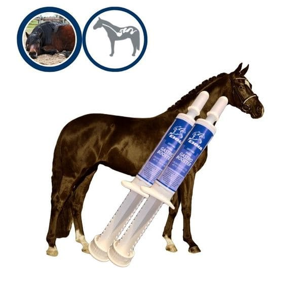Magen Darm Booster Pferd I Probiotika I Bierhefe I Hefekulturen Darmflora & Darsanierung I Magen-Darm-Trakt