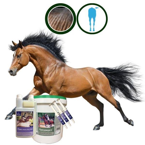 EMMA® Aufbaufutter Set Muskelaufbau Pferd + 3 Amino Energy Booster + Vitamin E Selen Pferd I Vitamin A C E K I B komplex B1 B2 B6 B 12 Sojabohne Stute Oldies Senior Pferde 1L 6 Kg 3 * 30 ml