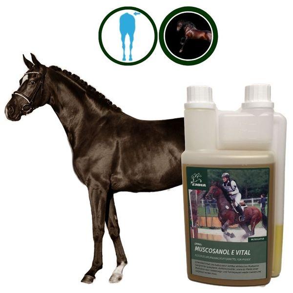 EMMA® Reiskeimöl I Vitamin E I Muskelaufbau Ausdauer Leistung Muskulatur Pferd I I Reiskeim Öl für Muskel Stoffwechsel I Futter Öl Omega 3 I Aufbaufutter Senior Fohlen Hengst Pferd 1L