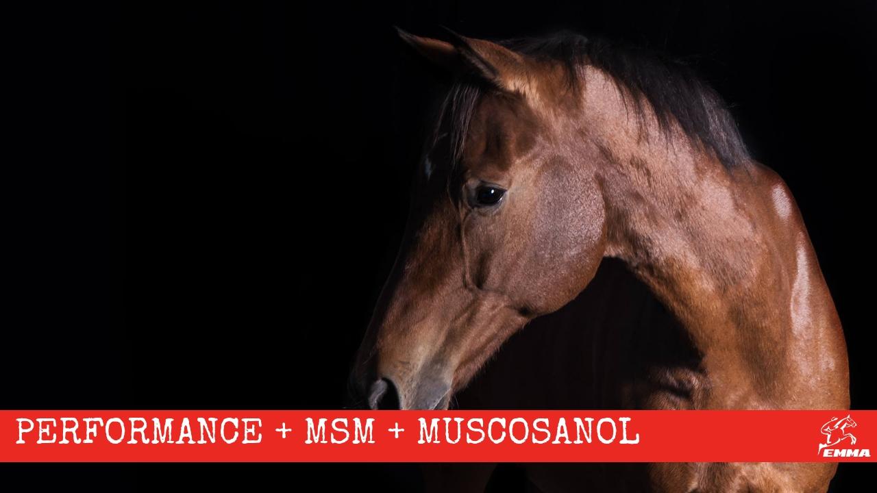 Pferd vorher nachher EMMA CARE
