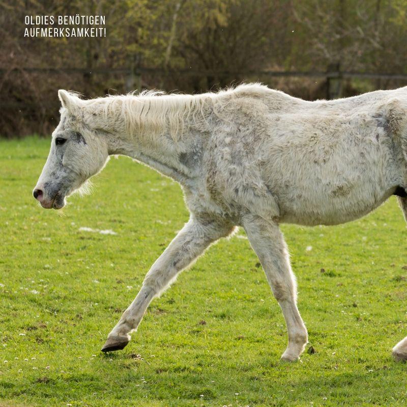 Alte Pferde richtig füttern