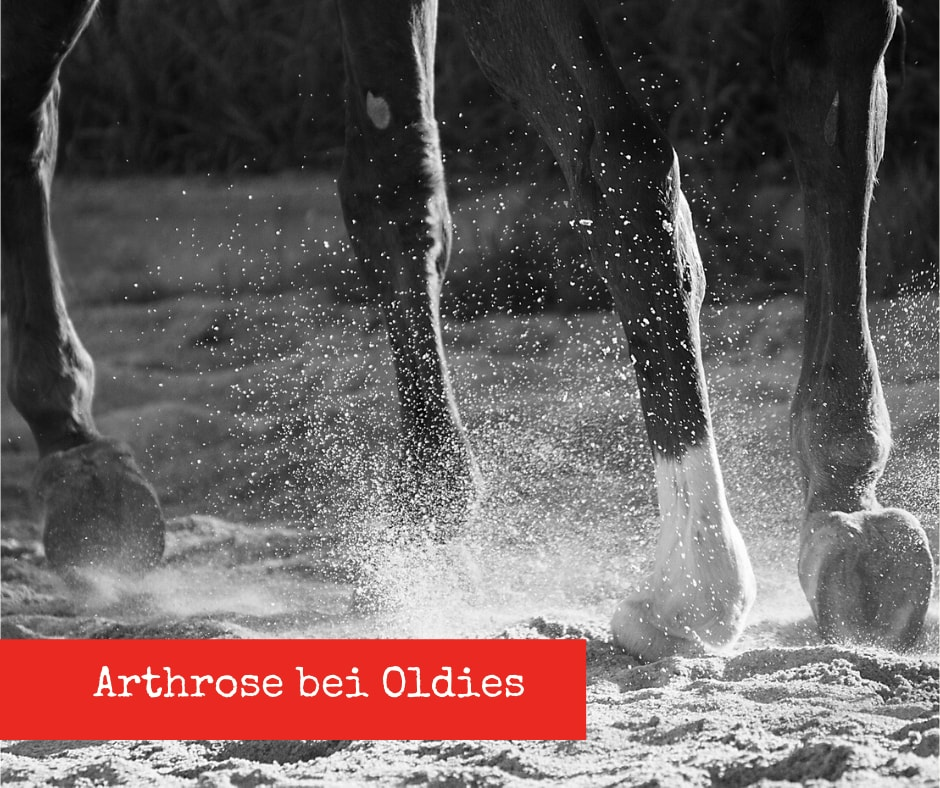 Arthrose bei älteren Pferden