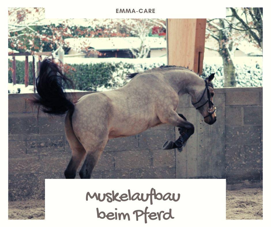 Muskelaufbau beim Pferd