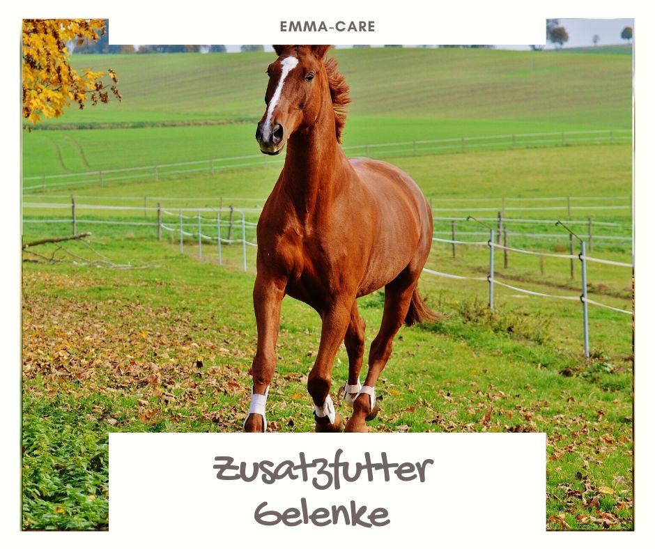 Zusatzfutter Pferd Gelenke & Pflege